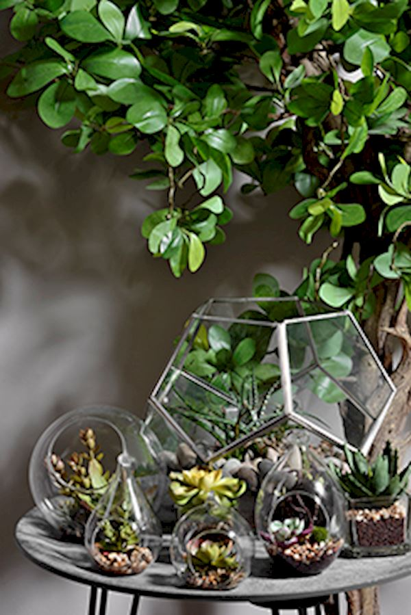 how to keep house plants warm in winter