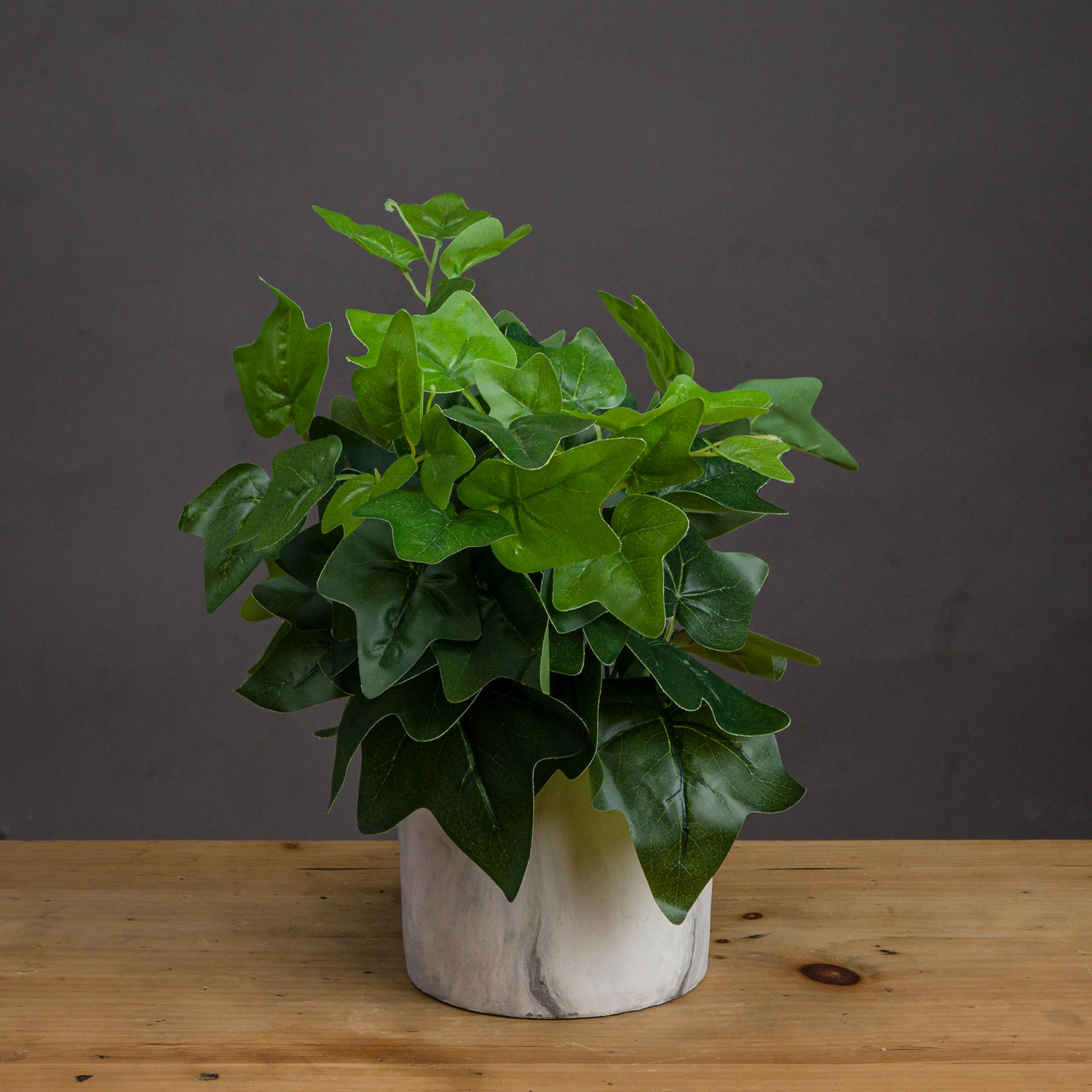 Potted Ivy House Plant   From Baytree Interiors
