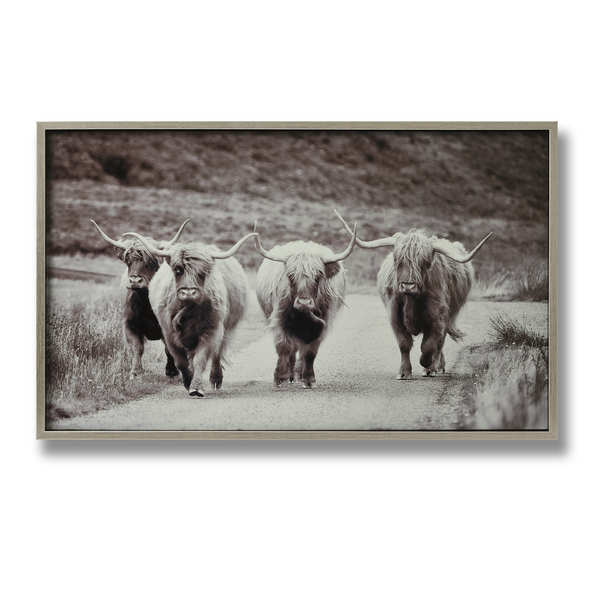 Highland Cattle Glass Image with Silver Frame
