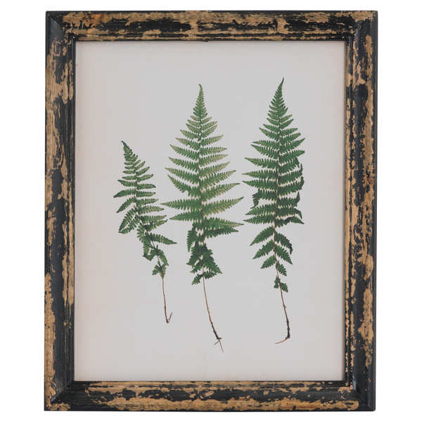 Rustic Framed Botanical Triple Fern Picture