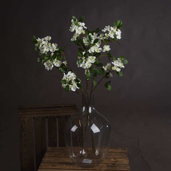 White Spring Mock Orange Flower