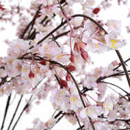 Image 2 - Artificial Japanese Cherry Blossom Tree