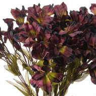 Image 5 - Chocolate Alstroemeria Lily Spray