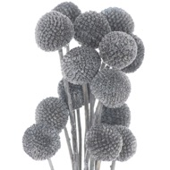 Image 1 - Dried Grey Billy Ball Bunch Of 20