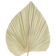 Image 4 - Dried Natural Fan Palm