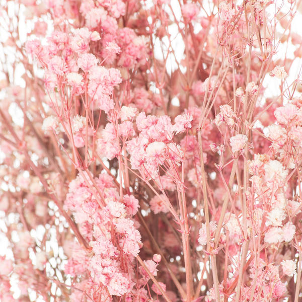 Image 2 - Dried Pale Pink Babys Breath Bunch