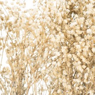 Image 2 - Dried White Babys Breath Bunch
