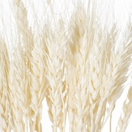 Image 3 - Dried White Wheat Bunch Of 20