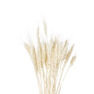 Image 1 - Dried White Wheat Bunch Of 20