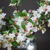 Image 2 - English Blossom Branch
