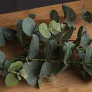 Image 3 - Eucalyptus Spray