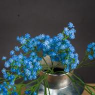Image 2 - Forget Me Not Spray