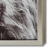 Image 2 - Highland Cow Left Facing Glass Image with Silver Frame