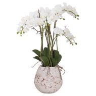 Image 1 - Large Stone Potted Orchid With Roots