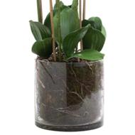 Image 3 - Large White Tall Orchid In Glass Pot