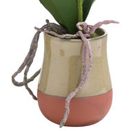 Image 2 - White Artificial Orchid In Terracotta Glazed Pot