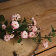 Image 3 - Pink Artificial Wild Meadow Rose 74cm