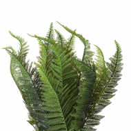 Image 4 - Potted Boston Fern