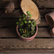 Image 2 - Potted Cacti and Succulent