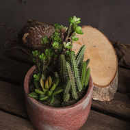 Image 3 - Potted Cacti and Succulent