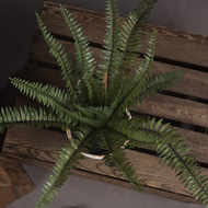 Image 2 - Potted Fern