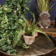 Image 7 - Potted Fern