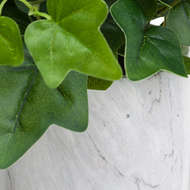 Image 3 - Potted Ivy House Plant