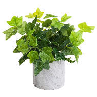Image 4 - Potted Ivy House Plant
