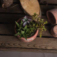 Image 2 - Potted Succulent