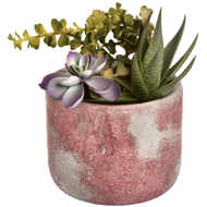 Image 4 - Potted Succulent