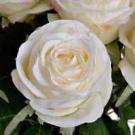 Image 6 - Traditional White Rose