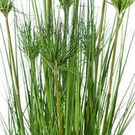 Image 5 - Water Bamboo Grass 48 Inch