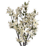 White Blossom Spray