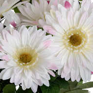 Image 2 - White Gerbera Bouquet