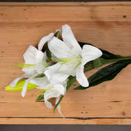 Image 2 - White Lily