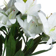 Image 5 - White Lily