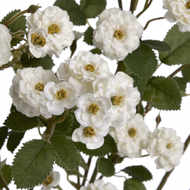 Image 6 - White Artificial Wild Meadow Rose 74cm